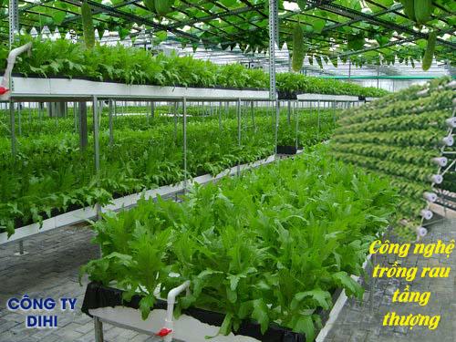 Công nghệ trồng rau trên tầng thượng