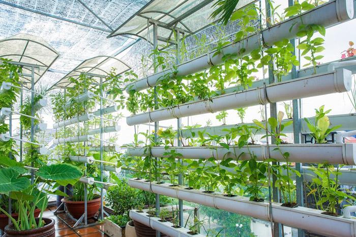 vườn rau trên tầng thượng